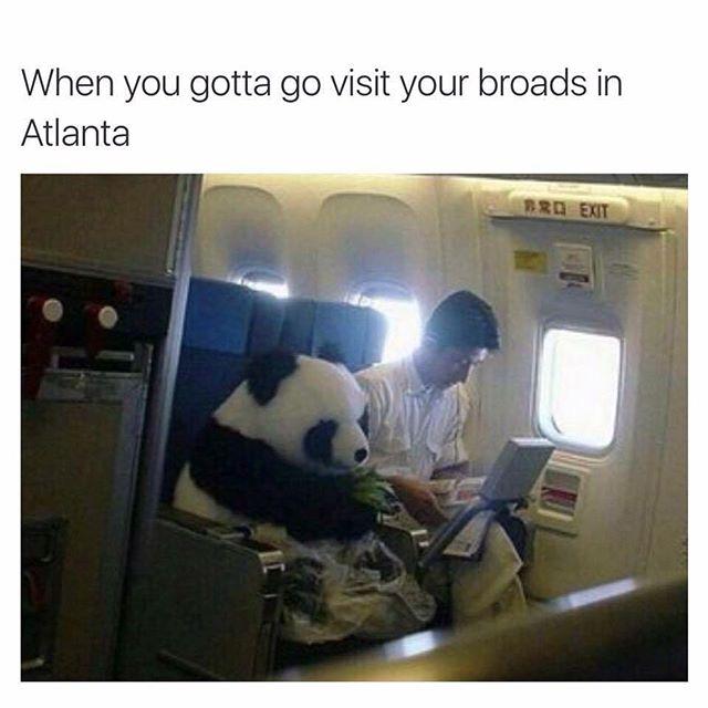 Panda-Meme-1